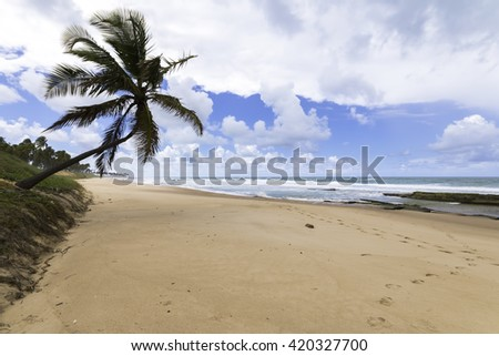 beautiful landscape in paradise beach with lone coconut in Bahia Brazil - stock photo