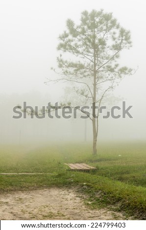 Beautiful landscape in the early morning fog, Pinus tree on Phu Kradueng National Park