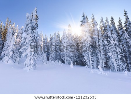 Beautiful landscape in the mountain forest. Winter morning.