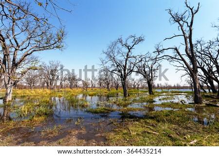 beautiful landscape in the Okavango swamps, Moremi game reserve landscape, Okavango Delta, Botswana - stock photo