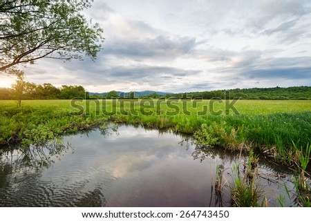 Beautiful landscape. Nature of western Ukraine. Tree on the field on a background of dramatic cloudy sky - stock photo