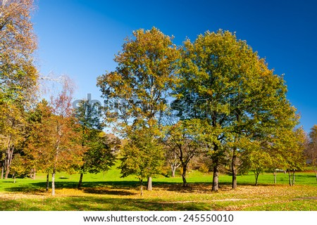 Beautiful landscape of autumn old trees forest park with brilliant vivid yellow leaf trees on clear blue sky background - stock photo