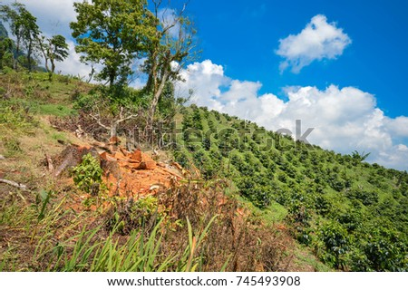 Beautiful landscape of coffee farms on the slopes of the hills surrounding a small village of coffee growers in San Luis de Planes, by Santa Barbara National Park, Honduras