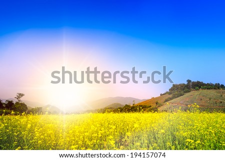 beautiful landscape of countryside yellow flower and hill,beautiful landscape of countryside yellow flower and hill,Blue sky super light - stock photo