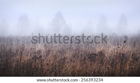 Beautiful landscape of foggy field in Autumn - stock photo