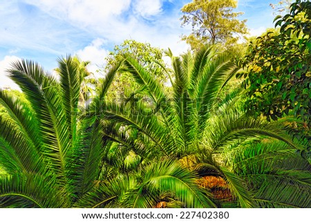 Beautiful landscape of humid tropical jungle - stock photo
