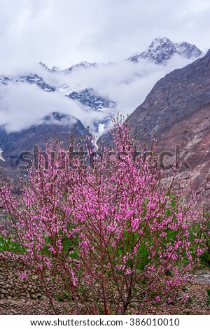 beautiful Landscape of Hunza Valley with Apricot blossom, Northern Area of Pakistan - stock photo