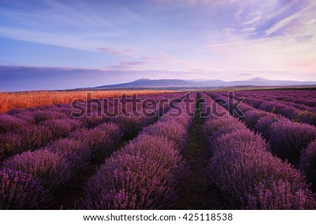 Beautiful landscape of lavender fields at sunrise with dramatic sky - stock photo