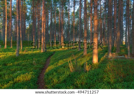 Beautiful landscape of pine forest at dawn
