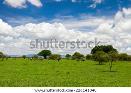 Beautiful landscape of Tarangire national park, Tanzania - stock photo