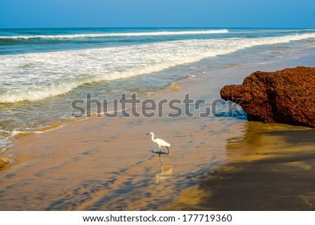 beautiful landscape of the coast with a white bird of Varkala. India, Kerala - stock photo