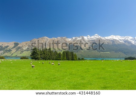 Beautiful landscape of the New Zealand - hills covered by green grass with herds of sheep with mighty mountains covered by snow and lake Wakatipu behind. Glenorchy, New Zealand - stock photo