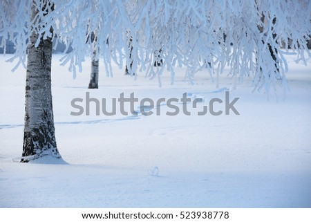 Beautiful landscape of winter forest with hoarfrost on trees