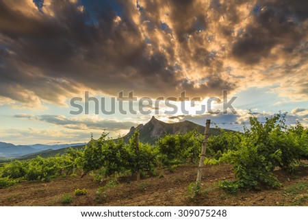Beautiful landscape overlooking the vineyards and high mountains. - stock photo