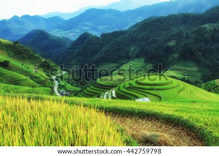 Beautiful landscape Rice filed terraces at Lao Chai, Sapa, Vietnam