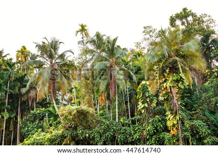 Beautiful landscape, tropical palm beach