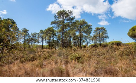 Beautiful landscape view of a bunch of pine trees over a cloudy blue sky.