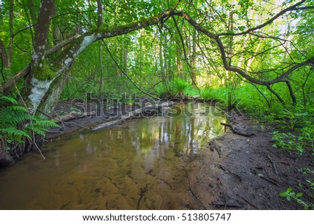 Beautiful landscape with a river in the forest. Fallen branches of trees in the river.