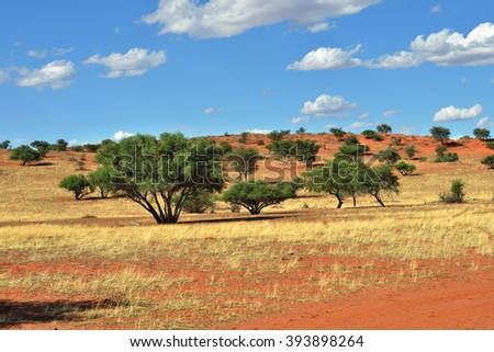 Beautiful landscape with acacia trees in the Kalahari desert at evening light, Namibia, Africa