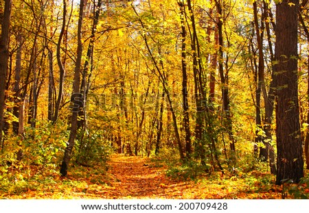 Beautiful landscape with autumn forest