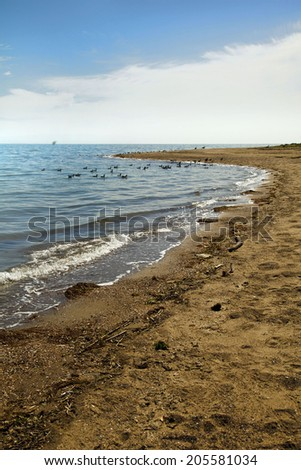 Beautiful landscape with blue sky, Sunshine, birds and sea shore with stones and sand