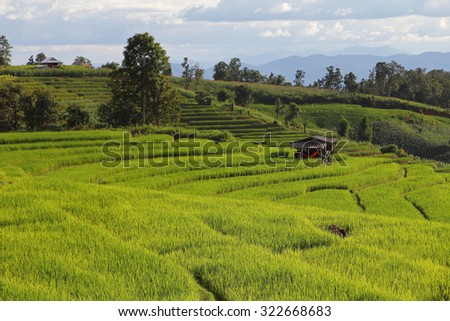Beautiful landscape with colorful, light and shadow of the rice terraces(paddy field) and mountains at Mae-Jam Village , Chaingmai Province in Thailand