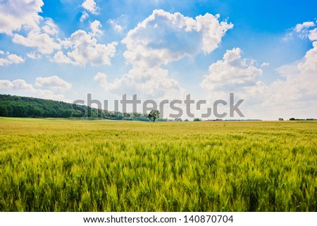 Beautiful landscape with cornfield and trees in Tuscany, Italy - stock photo