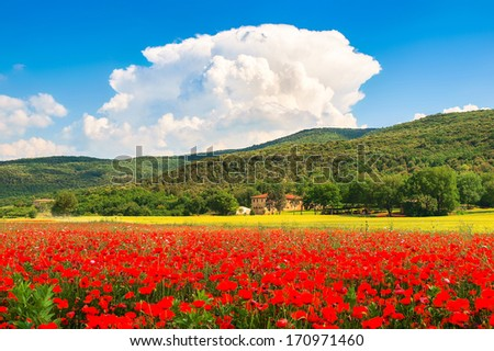 Beautiful landscape with field of red poppy flowers and traditional farm house in Monteriggioni, Tuscany, Italy - stock photo
