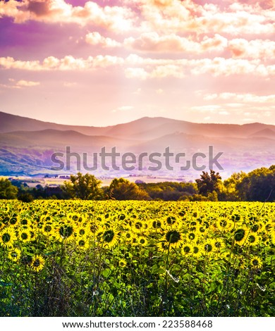 Beautiful landscape with field of sunflowers and mountains in distance