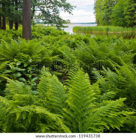 Beautiful landscape with grassy bank of river and fern - stock photo