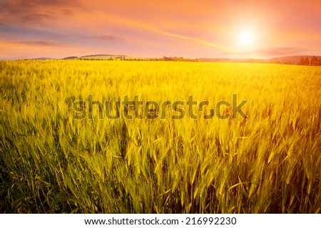 Beautiful landscape with green field and setting sun - stock photo