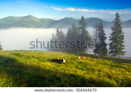 Beautiful landscape with green hills and a herd of cows