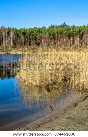 Beautiful landscape with lake shore and forest in early spring.