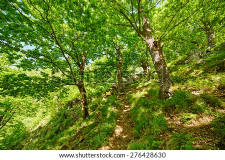 Beautiful landscape with marked trail on a mountain forest in a sunny spring day - stock photo