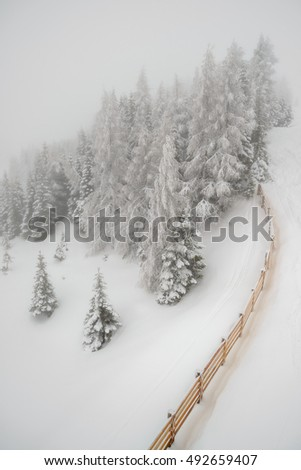 Beautiful landscape with mist and snowfall in winter forest