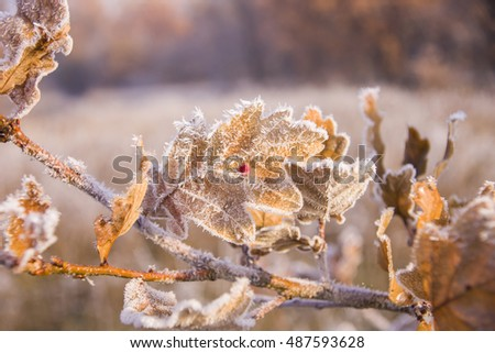 beautiful landscape with morning frost,Autumn field morning