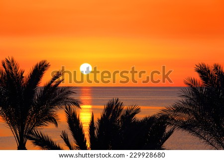 beautiful landscape with palms and sunrise over sea - stock photo