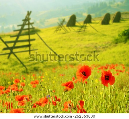 Beautiful landscape with poppies and fresh cut grass in a meadow in sunlight in Karpatian, Ukraine - stock photo