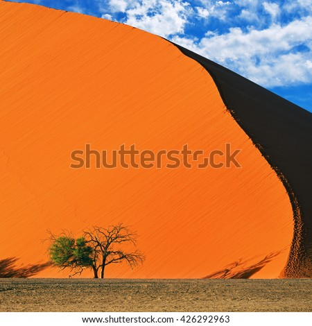 Beautiful landscape with red dune and trees at sunrise, Sossusvlei, Namib Naukluft National Park, Namibia