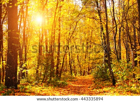 Beautiful landscape with road in autumn forest and bright sun - stock photo