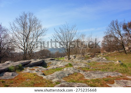 Beautiful landscape with rocks and trees - stock photo