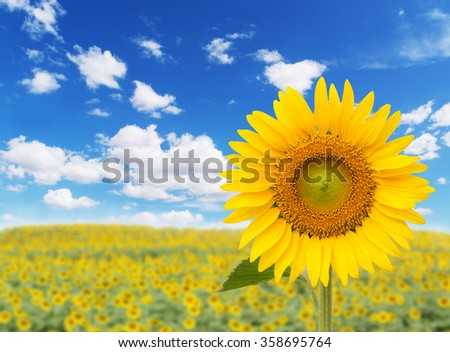 Beautiful landscape with sunflower field over cloudy blue sky