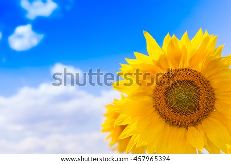 Beautiful landscape with sunflower field over cloudy blue sky and bright sun lights close up