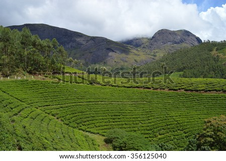 Beautiful landscape with tea estates on hills.