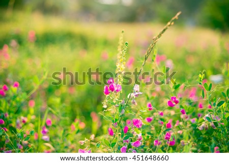 Beautiful landscape with the wilderness of herbs and pink wildflowers. The idea of the background of Mother's day, 8 March and World environment day. Soft focus. Shallow depth