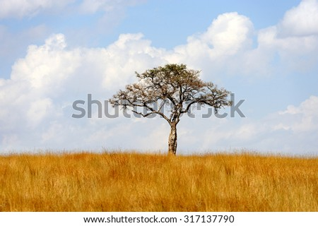 Beautiful landscape with tree in Africa - stock photo
