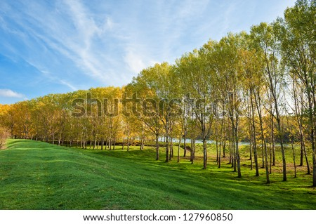 beautiful landscape with trees and grass - stock photo