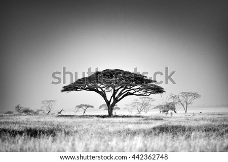 Beautiful landscape with trees in african natural park - stock photo