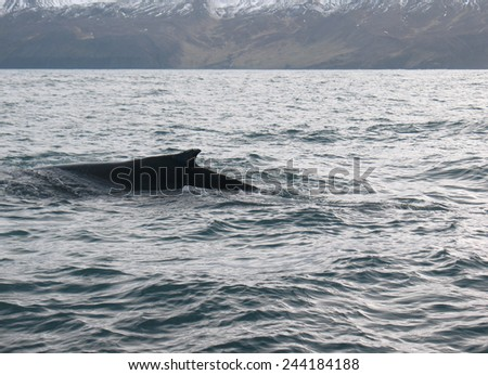 Beautiful landscape with whale, mountains and ocean - stock photo