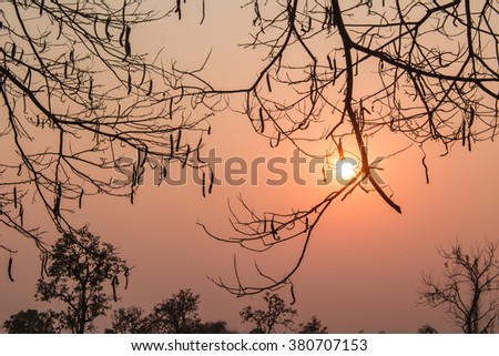 Beautiful landscapes image middle of the field with the sun silhouette at sunset.